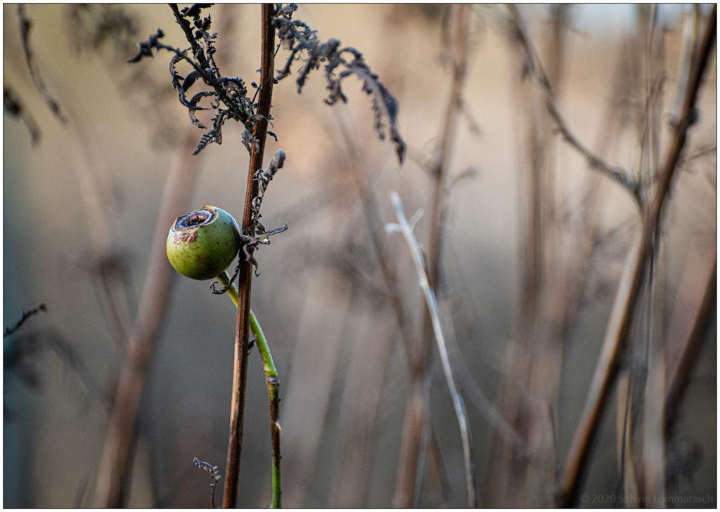 Winterliches Blumenbeet © 2020 Sabine Lommatzsch