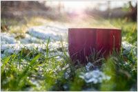 Wintersonne im Schrebergarten © 2019 Sabine Lommatzsch