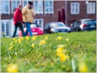 Frühlingsspaziergang © 2020 Sabine Lommatzsch