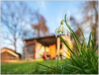 Frühlingssonne und Schneeglöckchen © 2020 Sabine Lommatzsch