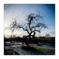 365-Tage-Projekt 17/365 © 2018 Sabine Lommatzsch