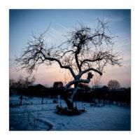 365-Tage-Projekt 40/365 © 2018 Sabine Lommatzsch