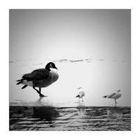 365-Tage-Projekt 47/365 © 2018 Sabine Lommatzsch