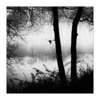 365-Tage-Projekt 71/365 © 2018 Sabine Lommatzsch