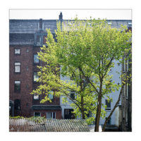 365-Tage-Projekt 120/365 © 2018 Sabine Lommatzsch