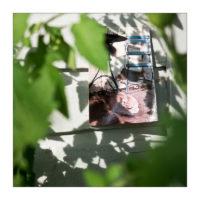 365-Tage-Projekt 220/365 © 2018 Sabine Lommatzsch