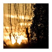 365-Tage-Projekt 311/365 © 2018 Sabine Lommatzsch