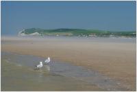 Möwen am Strand von Wissant, Pas de Calais © 2012 Sabine Lommatzsch