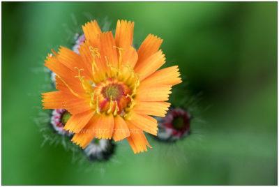Blütenmakro 1 © 2017 Sabine Lommatzsch