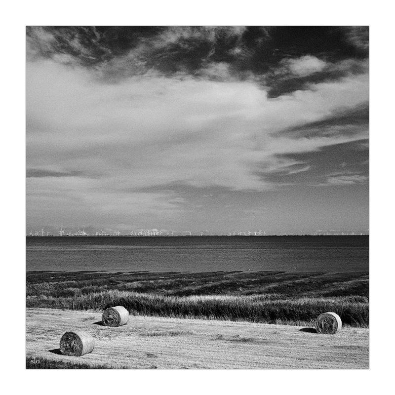 365-Tage-Projekt 200/365 © 2019 Sabine Lommatzsch