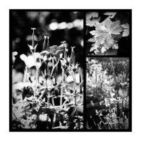 365-Tage-Projekt 255/365 © 2019 Sabine Lommatzsch