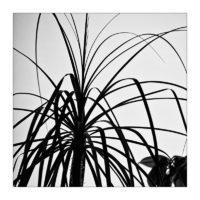 365-Tage-Projekt 321/365 © 2019 Sabine Lommatzsch