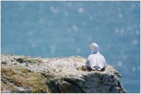 Möwe und Meeresglitzern in Etretat © 2011 Sabine Lommatzsch