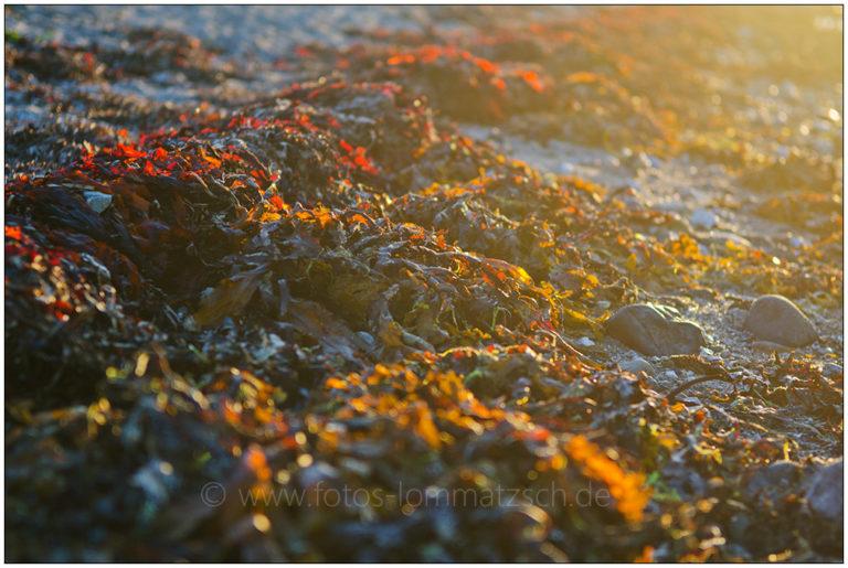 Algen im Sonnenlicht © 2012 Sabine Lommatzsch