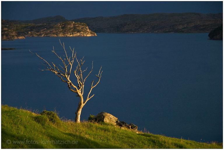 Baum im Sonnenlicht an der Küste vor Bergen, Norwegen © 2008 Sabine Lommatzsch